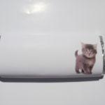 ID 176 - Cat